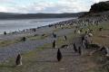 Eine Insel voller Pinguine nahe Harberton