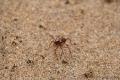 Sehr große Ameisen