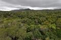 Regenwald bei Cairns