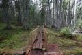 Estland 6 - Lahemaa Nationalpark - Der Oandu Nature Trail ist ein wirklich sehr schöner Wanderweg durch den Nationalpark