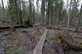 Estland 7- Lahemaa Nationalpark - Große Teile des Wegs führen auf Planken durch Moore