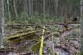 Estland 8 - Lahemaa Nationalpark - Gerade auch im Vergleich zu den umliegenden Kiefernwäldern wird deutlich wie sich ein Wald entwickelt, wenn er sehr lange sich selbst überlassen wird.