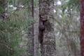 Estland 9 - Lahemaa Nationalpark - Laut Infotafeln gibt es hier Bären, Elche, Luchse...