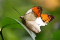 Kuala Lumpur - Schmetterlingspark