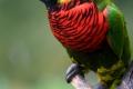 Kuala Lumpur - Vogelpark