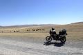 Direkt am Anfang der Mongolei begrüßt mich eine Herde Yaks