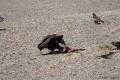 In der Mongolei sieht man öfter tote Tiere, oder das was davon noch übrig ist