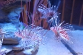 Bangkok - Aquarium